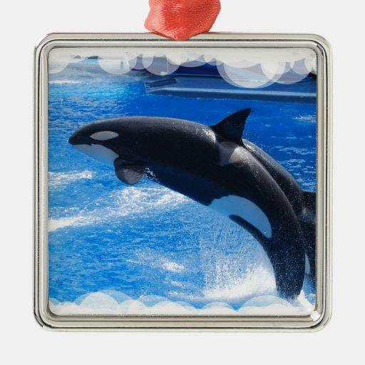 Ballena de salto de la orca adorno cuadrado plateado