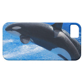 Ballena de salto de la orca iPhone 5 protectores