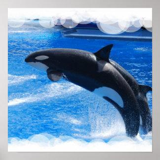 Ballena de salto de la orca poster