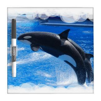Ballena de salto de la orca pizarras