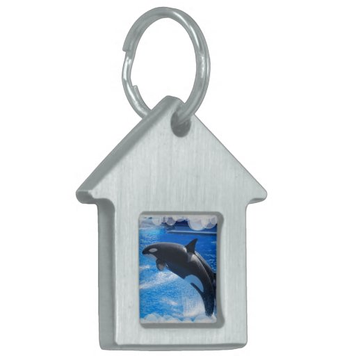 Ballena de salto de la orca placas de nombre de mascota