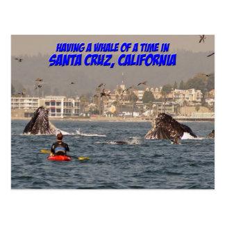 Ballena de una postal de Santa Cruz California del