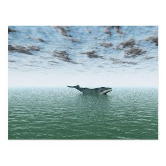 Ballena en el mar postales