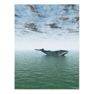 Ballena en el mar tarjetas postales
