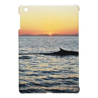 Ballena en la puesta del sol