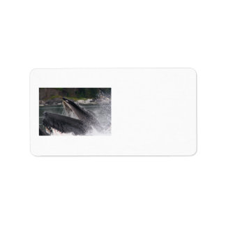 ballena etiqueta de dirección