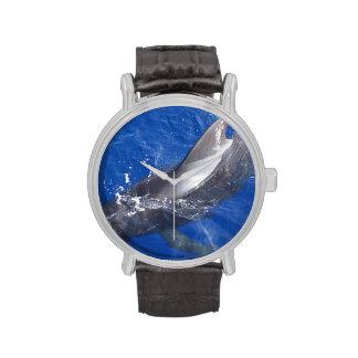 Ballena experimental en Hawaii Relojes De Pulsera