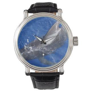 Ballena experimental en Hawaii Reloj De Mano