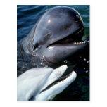 Ballena experimental y delfín de bottlenose atlánt tarjeta postal