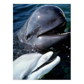 Ballena experimental y delfín de bottlenose atlánt tarjetas postales