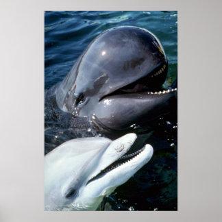 Ballena experimental y delfín de bottlenose póster