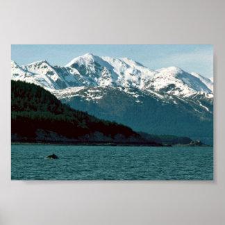 Ballena jorobada que viola en Alaska suroriental Póster