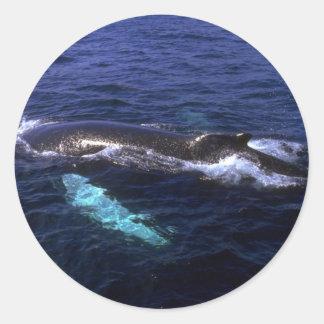 Ballena jorobada visible debajo del agua pegatina redonda