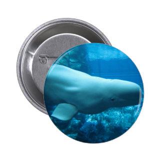 Ballena juguetona linda de la beluga en acuario en pin