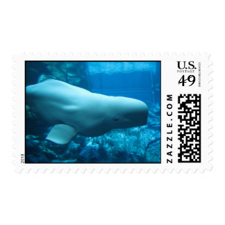 Ballena juguetona linda de la beluga en acuario en envio