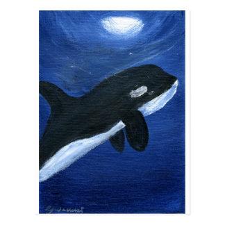 Ballena linda de la orca postal