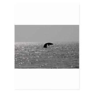 Ballena-observación - impresión meridional de la postales