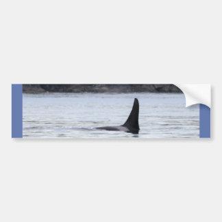 Ballena: Orca residente de la ballena de la orca Pegatina De Parachoque