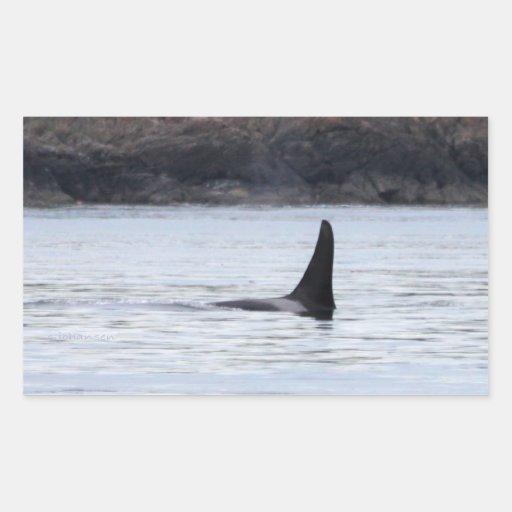 Ballena: Orca residente de la ballena de la orca Pegatina Rectangular