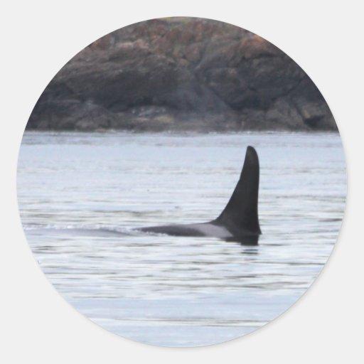 Ballena: Orca residente de la ballena de la orca Pegatina Redonda
