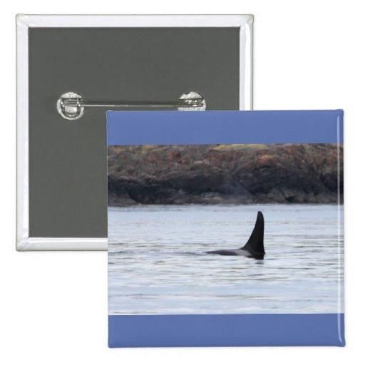 Ballena: Orca residente de la ballena de la orca Pin