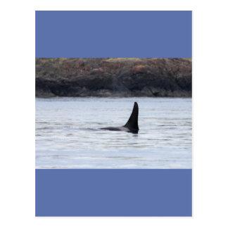Ballena: Orca residente de la ballena de la orca Postal