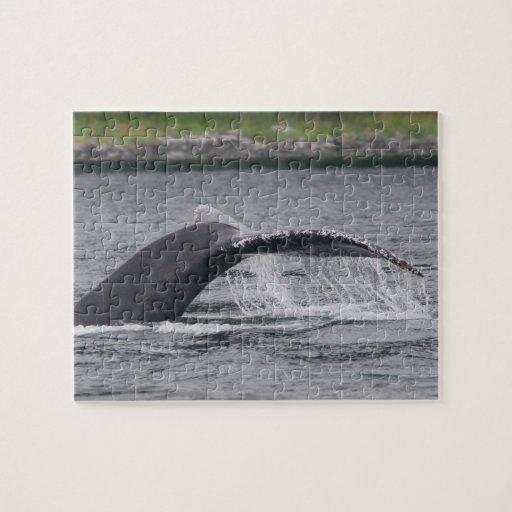 ballena puzzles