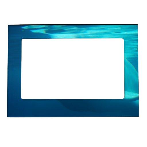 Ballena subacuática de la beluga marcos magneticos de fotos
