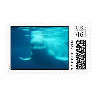 Ballena subacuática de la beluga envio