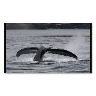 ballena tarjetas de visita magnéticas (paquete de 25)