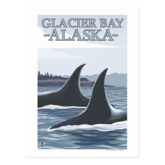 Ballenas #1 - Glacier Bay, Alaska de la orca Tarjetas Postales