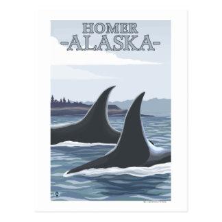 Ballenas #1 - home run, Alaska de la orca Postal