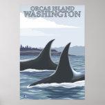 Ballenas #1 - orcas isla, Washington de la orca Posters