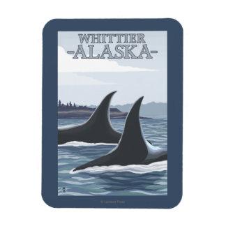 Ballenas #1 - Whittier, Alaska de la orca Imán Rectangular