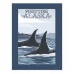 Ballenas #1 - Whittier, Alaska de la orca Tarjeta Postal