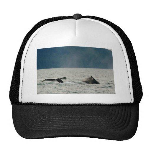 Ballenas de Alaska Gorro De Camionero