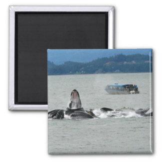 Ballenas de Alaska Imán Cuadrado