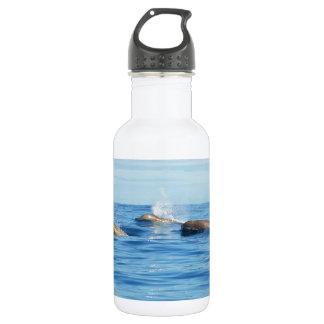 Ballenas de Bottlenose de Atlántico Norte