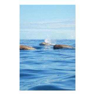 Ballenas de Bottlenose de Atlántico Norte Papelería Personalizada