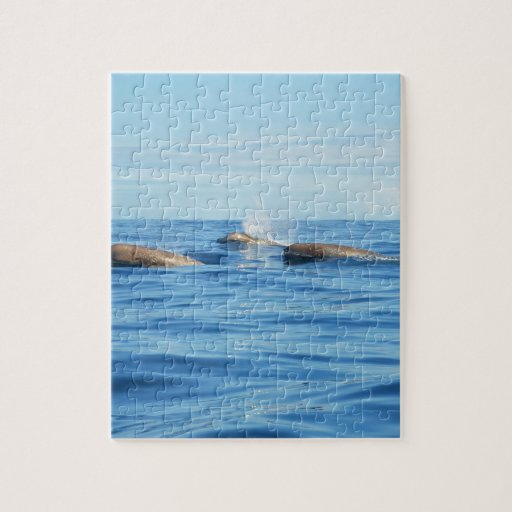 Ballenas de Bottlenose de Atlántico Norte Puzzle