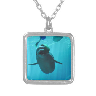 Ballenas de la beluga colgante