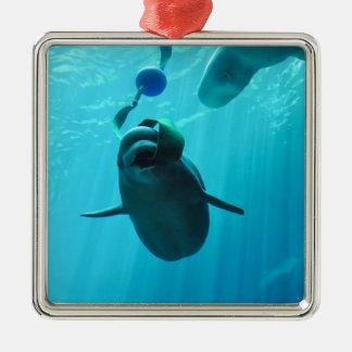 Ballenas de la beluga adorno para reyes