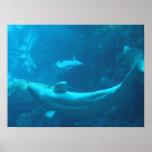 Ballenas de la beluga en vuelo poster