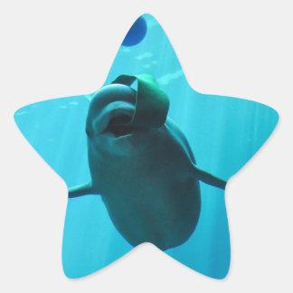 Ballenas de la beluga calcomanías forma de estrellaes