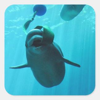 Ballenas de la beluga calcomanías cuadradass