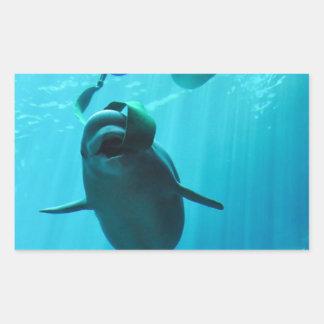 Ballenas de la beluga rectangular pegatinas