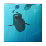 Ballenas de la beluga teja  ceramica