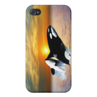 Ballenas en la puesta del sol iPhone 4/4S carcasa