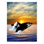 Ballenas en la puesta del sol postal