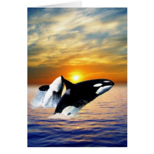 Ballenas en la puesta del sol tarjeta de felicitación